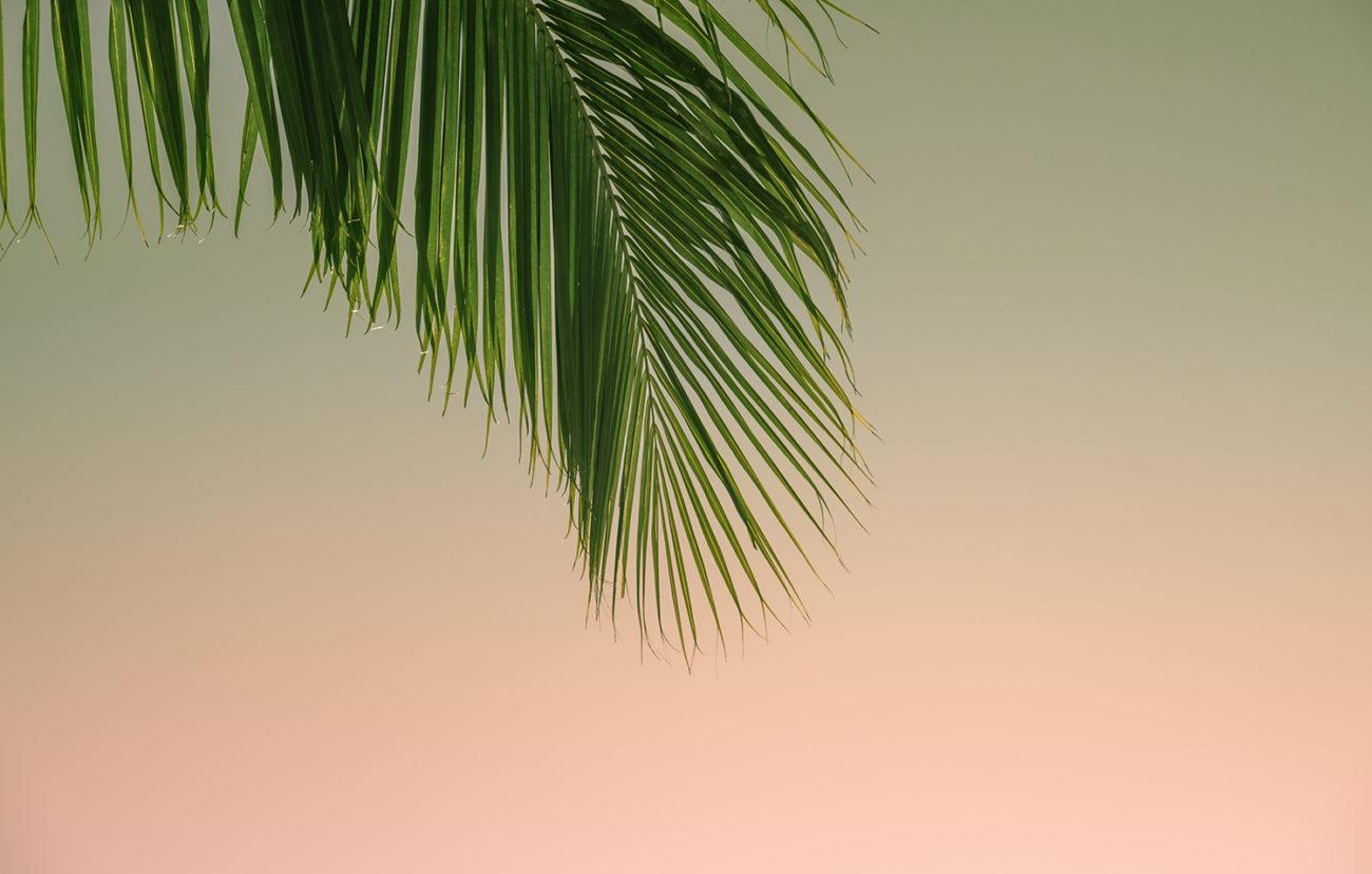 Palm leaf and pale sky, Florida, 2017