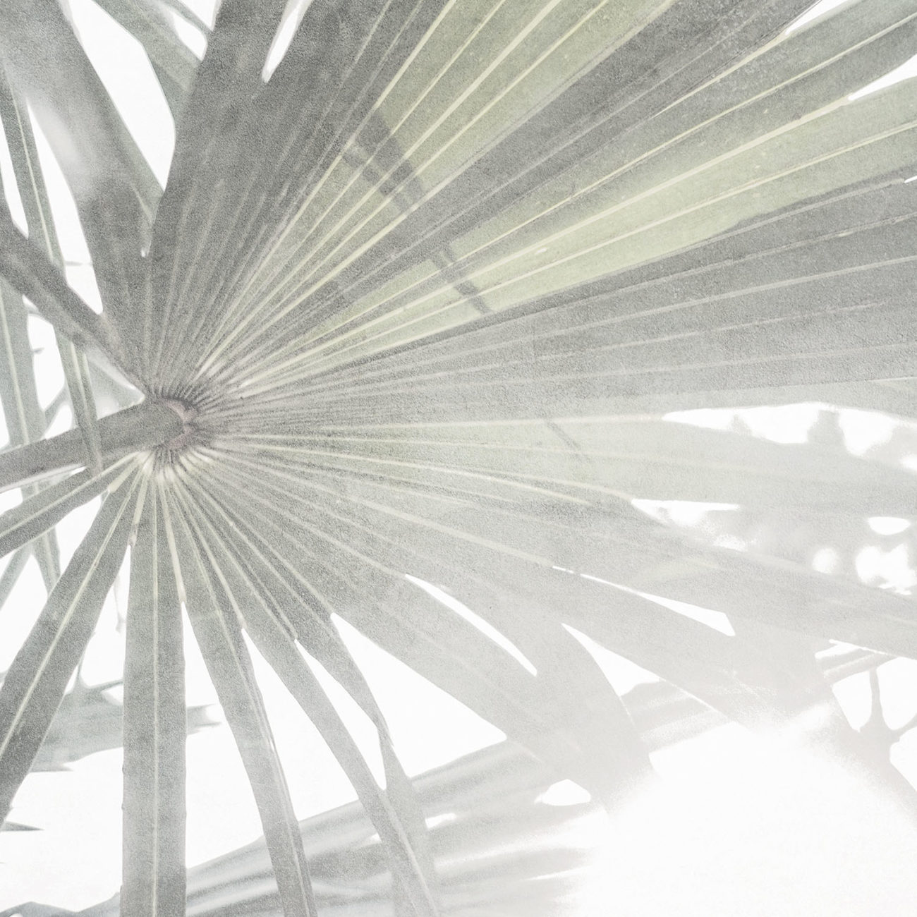 Sabal palm leaf, Study II, Florida, 2019