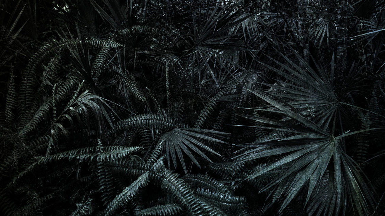 Tropical forest, Study I, 2019