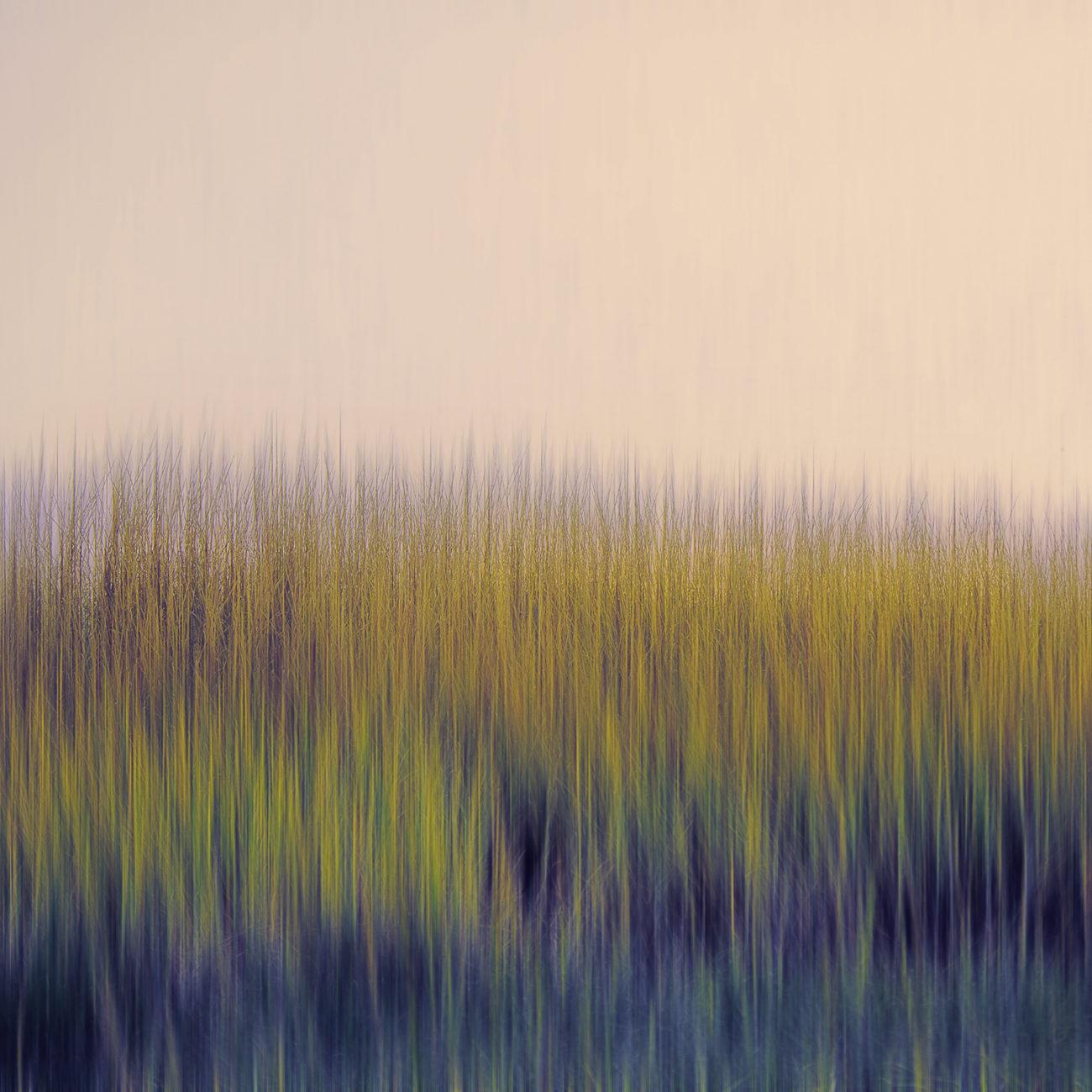 Seagrass Assateague Island, 2014