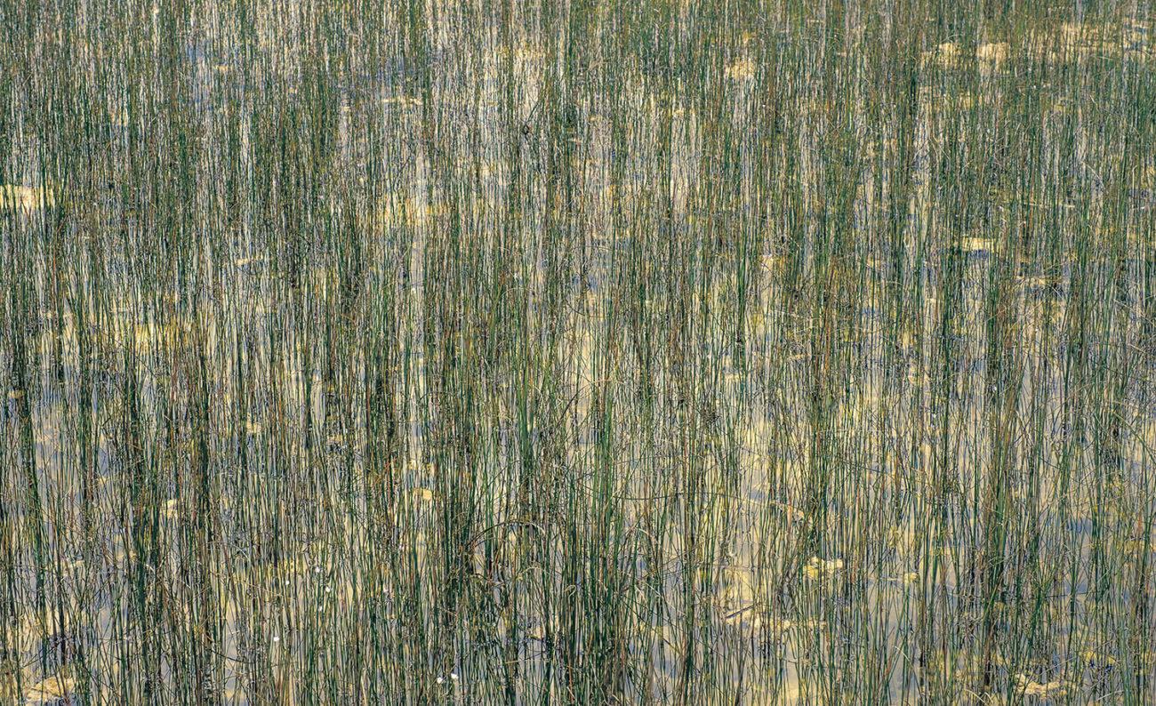 Everglades sawgrass, Study II, 2019