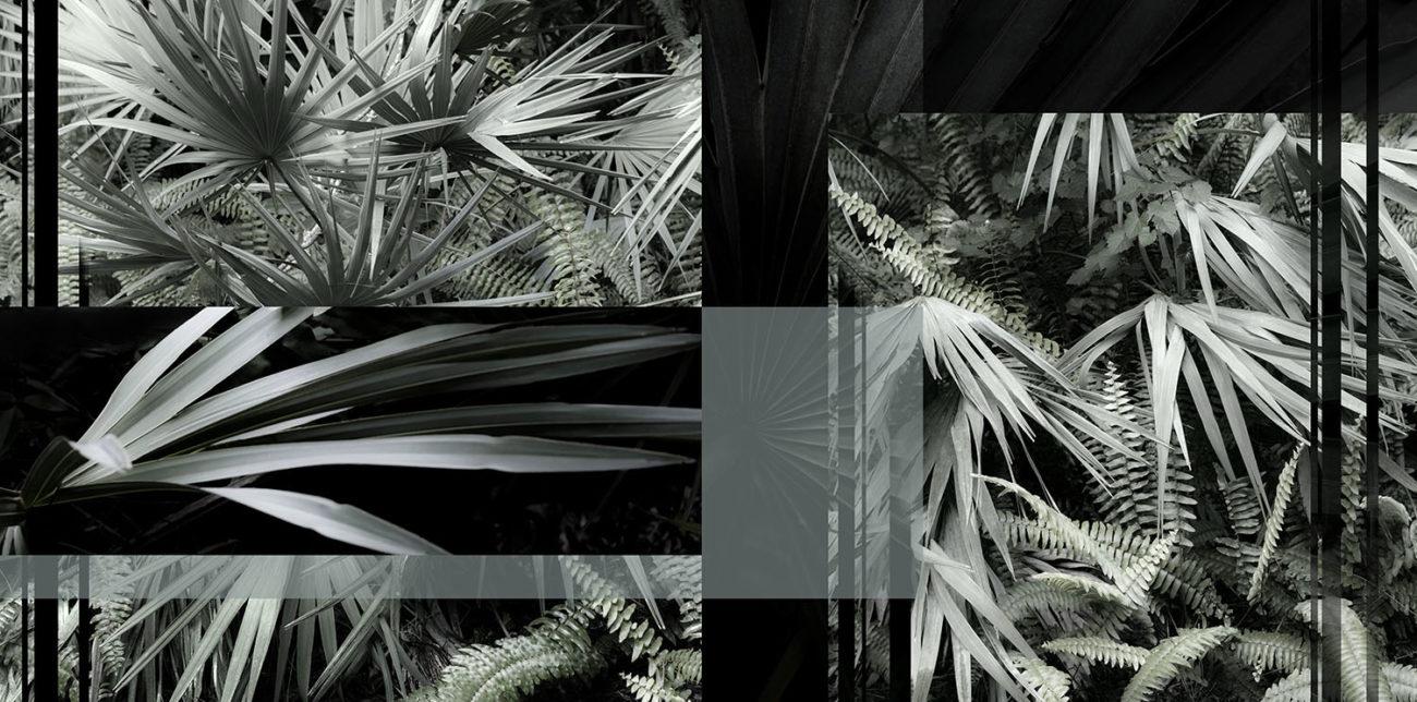 Tropical display, 6-6-20